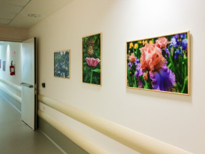 Photographic Art in Hospitals Aids The Healing Process